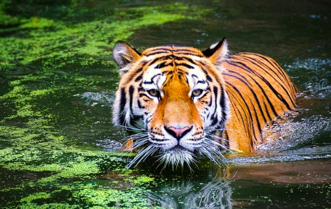 'Tiger King' sends wrong message